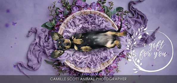 Camille Scott Dog Photographer Brisbane Gift Certificates