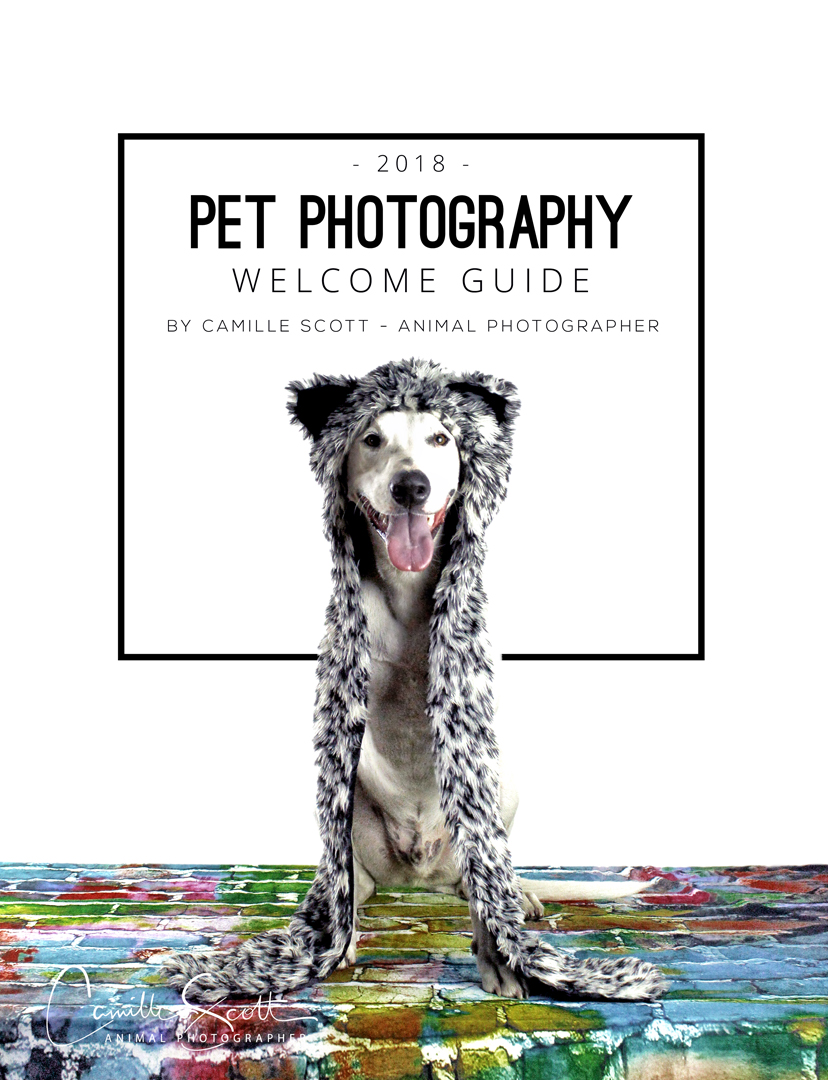 Pet Photography Welcome Guide 2018 - Camille Scott Animal Photographer Brisbane