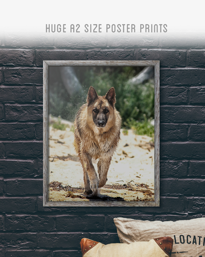 Huge A2 Size Poster print