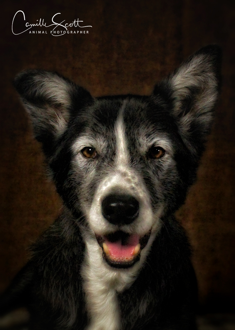 Camille Scott Dog Photographer Brisbane - Limited Edition