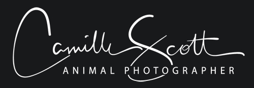 Camille Scott Animal Photographer Brisbane
