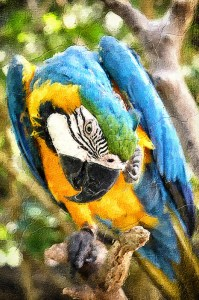 macaw_prints_camille_scott_photographer